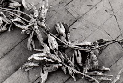 "Suzan Vachon FILIATIONS © Suzan Vachon, exposition ""Filiation"", Galerie B-312, 1994."